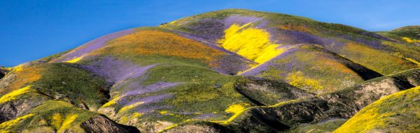 Seeing California's Super Bloom from Space